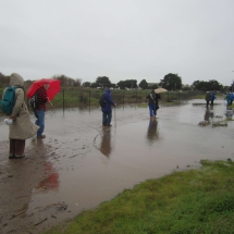 fbpwa-remembering-sylvia-mclaughlin-walk-121516-walking-through-flooded-area-due-to-king-tide-2
